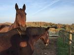 chevaux en vacances, Le Fougeray, Pissotte